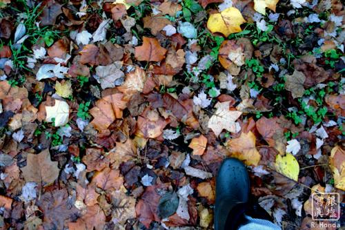 落ち葉と足.jpg
